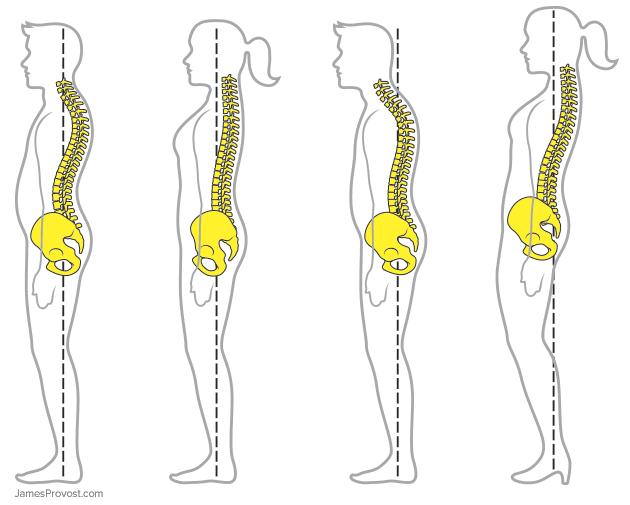 Proper Posture Spine Illustration